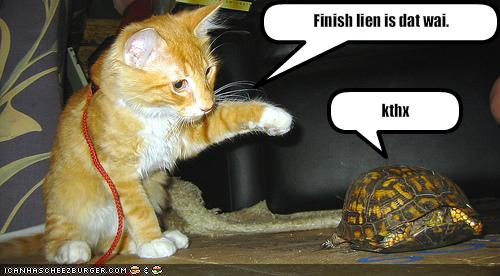 funny-pictures-cat-helps-tortoise-win-race