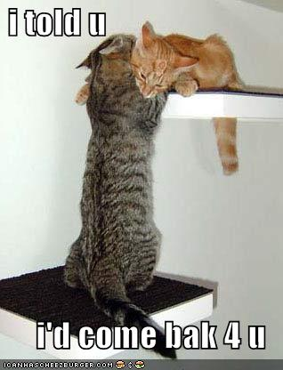funny-pictures-cat-has-come-back-for-his-love