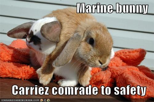 funny-pictures-marine-bunny
