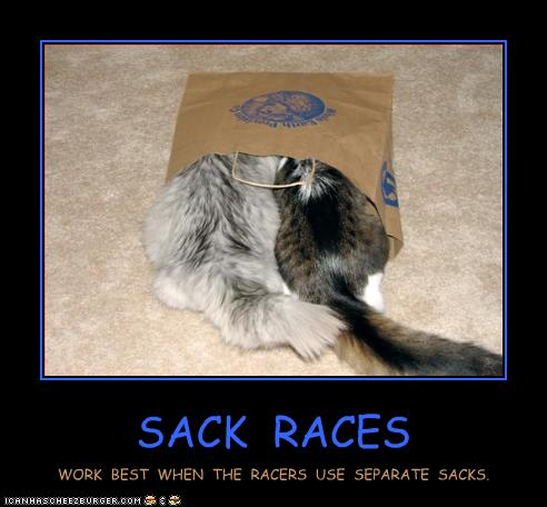 funny-pictures-cats-have-sack-race