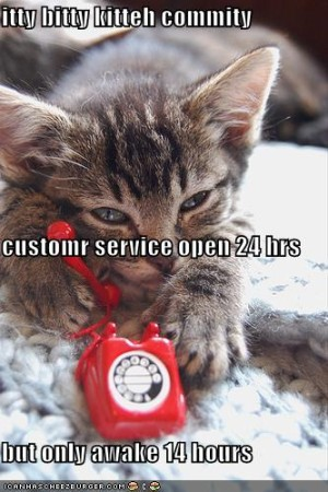 Customer Service: New Scope of Authorial Duties