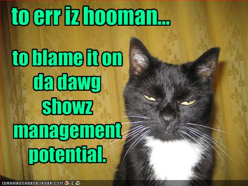funny-pictures-cat-shows-potential-by-blaming-things-on-the-dog