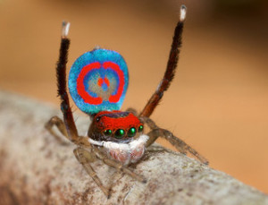 Monday News: Pearson buys 5% stake in Nook Media; NYTimes celebrates the deceased 2012 artists; Links about spiders