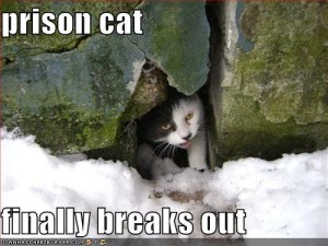 Monday News: Prison Break Cat-style; Bluetooth Stickers; Publishing trends for 2013