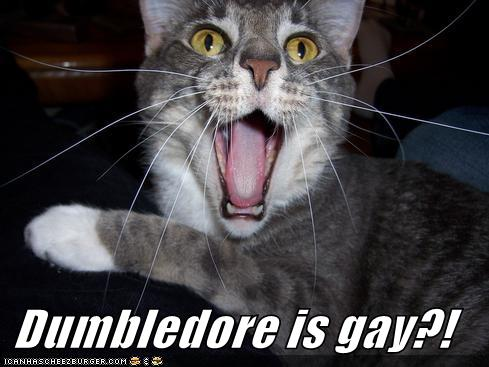 dumbledore-is-gay-lolcat